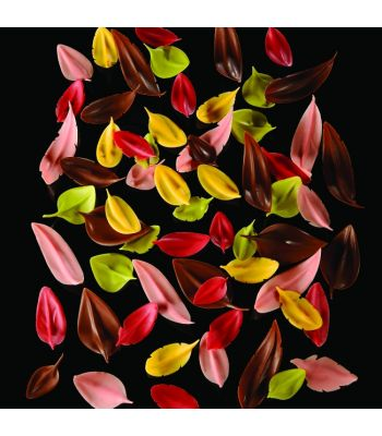 CH4-Flychoc-small-foglia-cioccolato